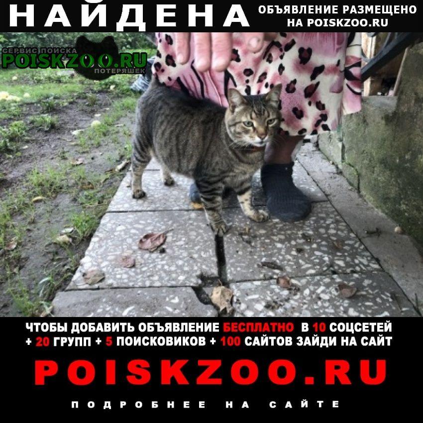 Найден кот. Звенигород