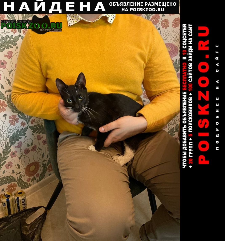 Найдена кошка котенок 4-5 месяцев Москва