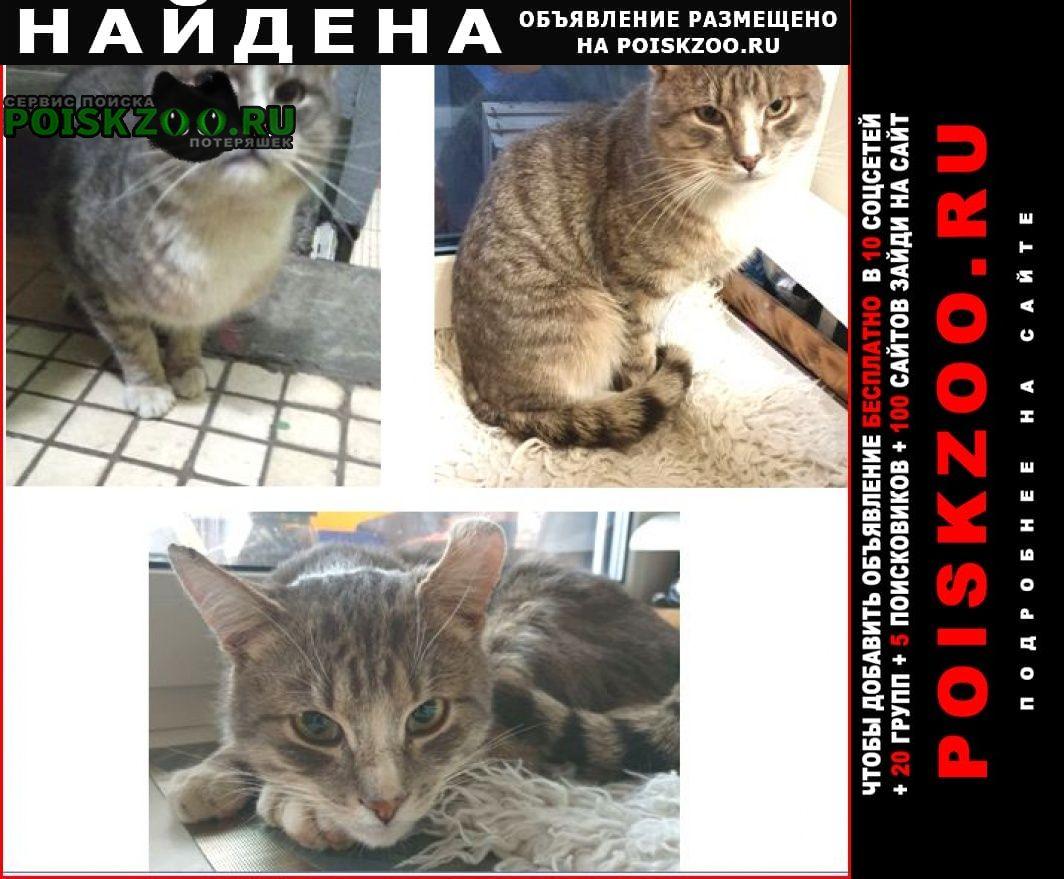 Найдена кошка кот. р-н коптево. серо-бел.полос. Москва