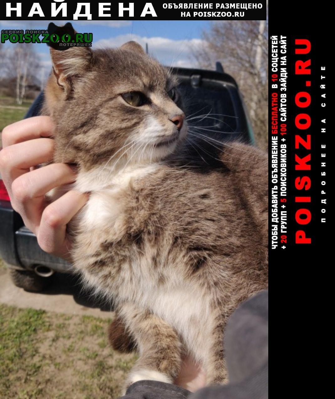 Найден кот у сыроварни олега сироты Истра