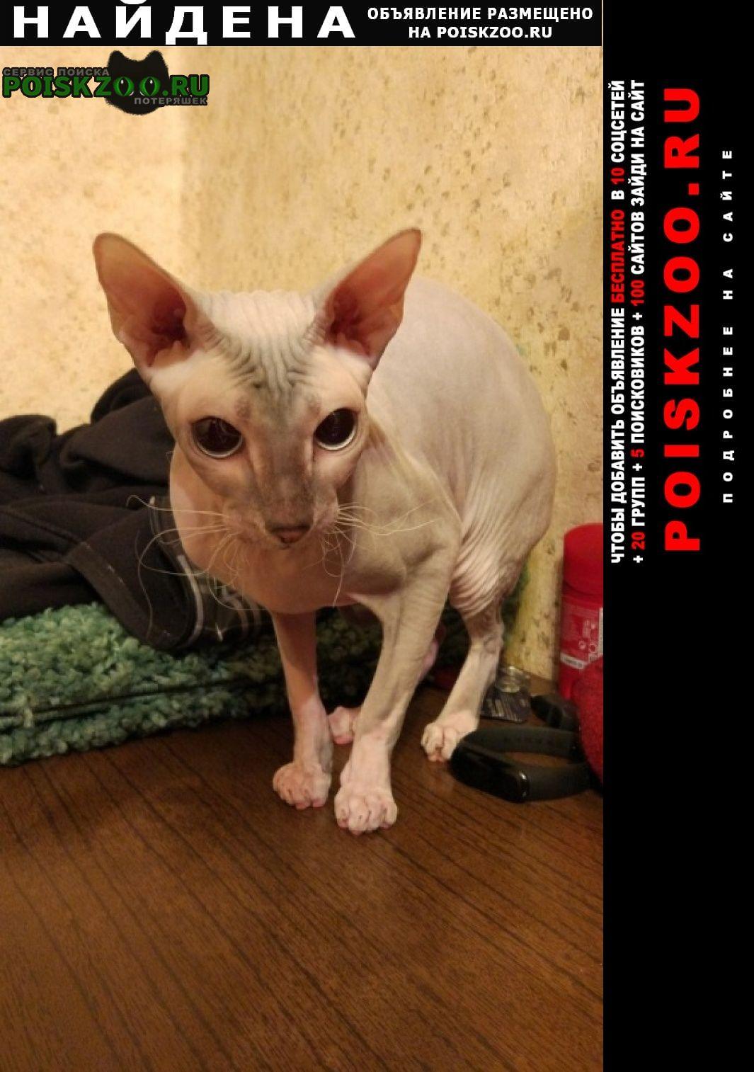 Найдена кошка сфинкс Ломоносов