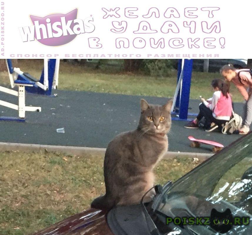Найдена кошка ухоженная в ошейнике г.Москва