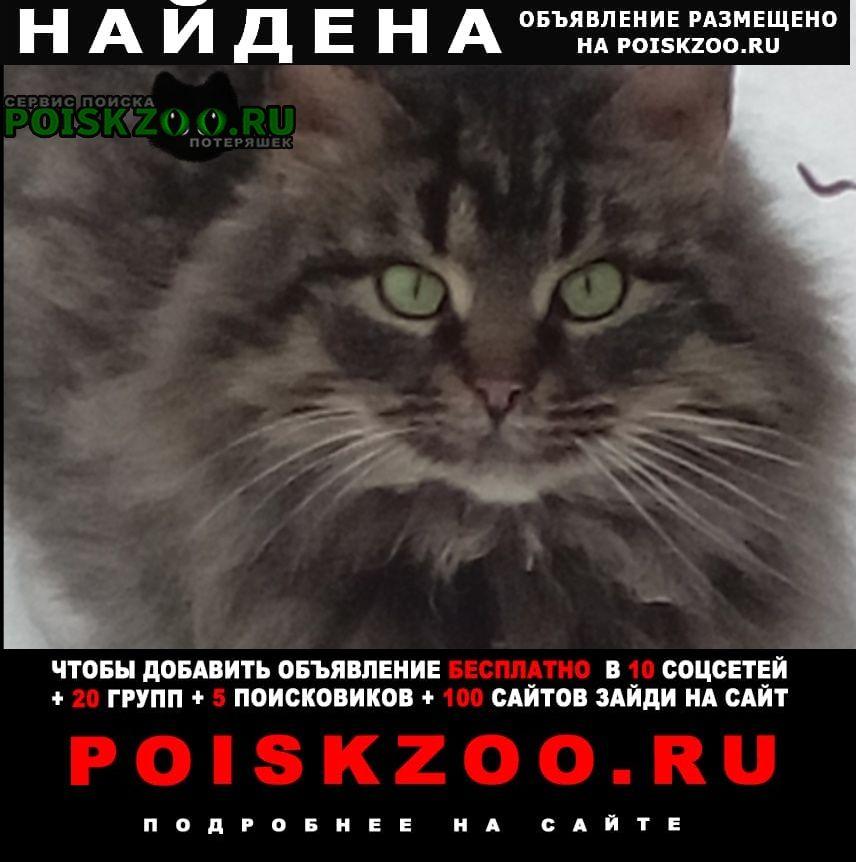 Найдена кошка в Балашиха