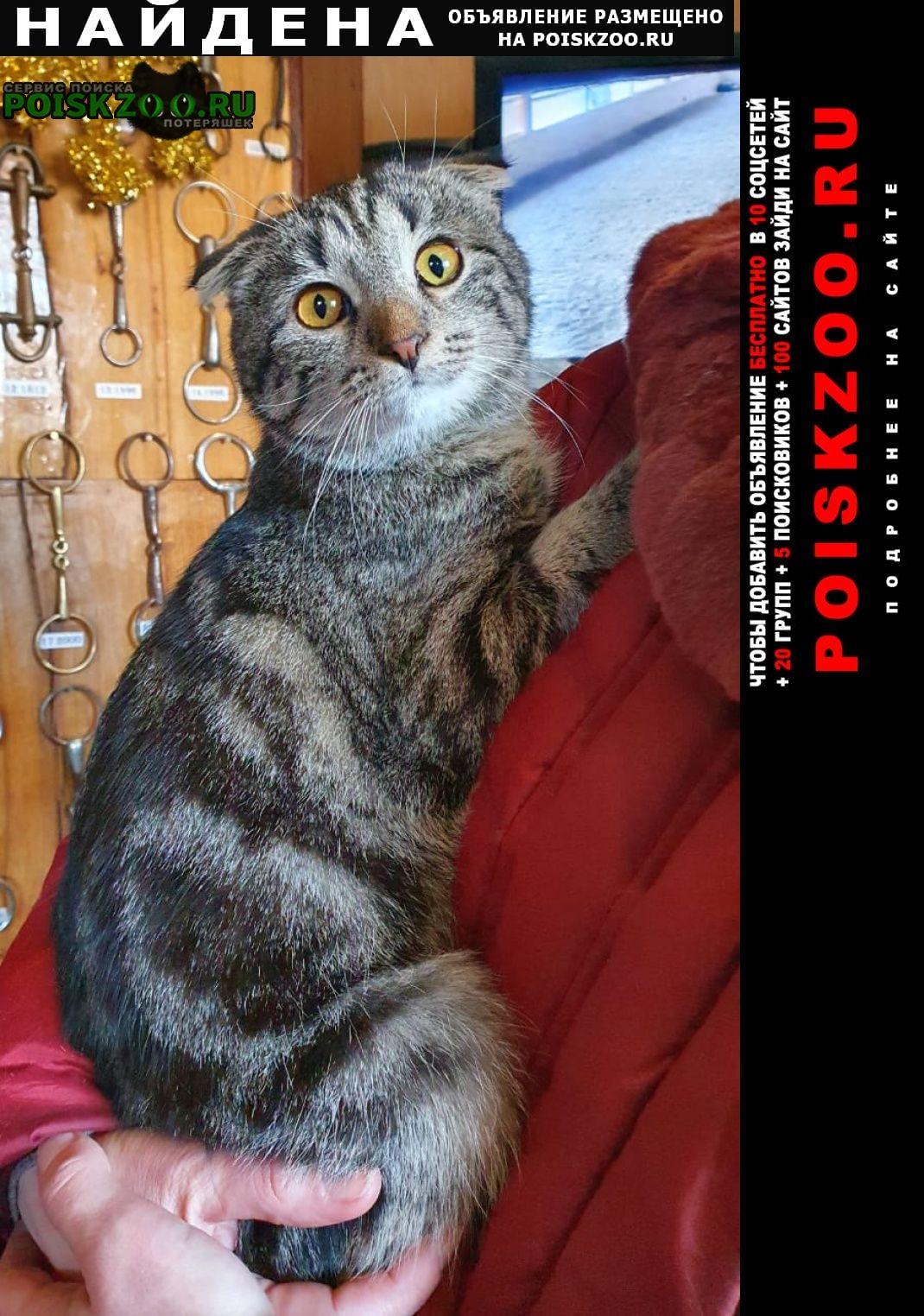 Найдена кошка шотландская вислоухая девочка Москва