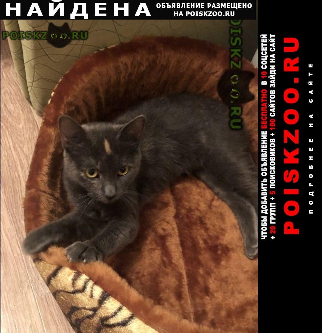 Найдена кошка  28 декабря г.Санкт-Петербург