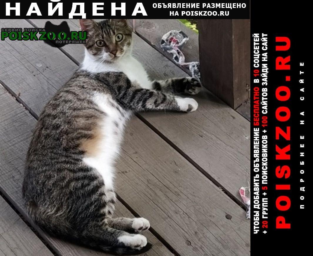 Найдена кошка Красногорск