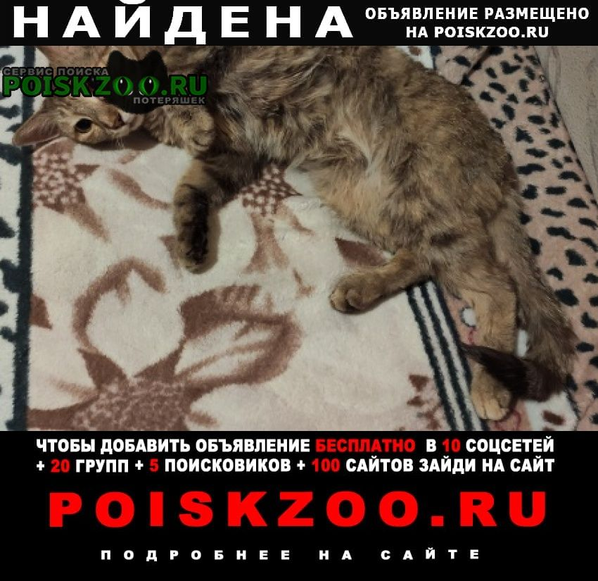 Найдена кошка, мкр тулака Волгоград