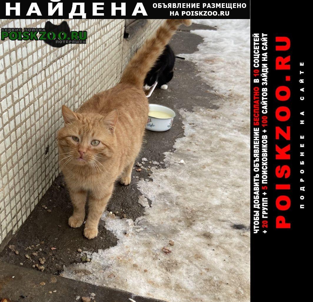 Найдена кошка рыжий кот. Мытищи