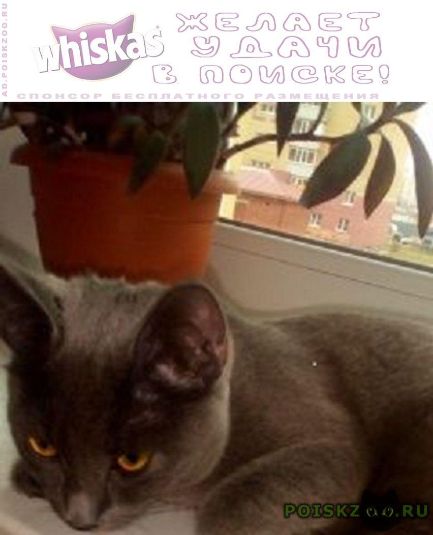 Найдена кошка г.Тюмень