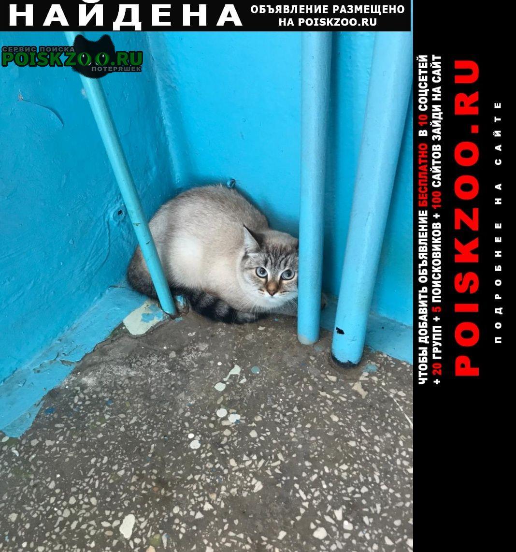 Найдена кошка хозяин, найдись Челябинск