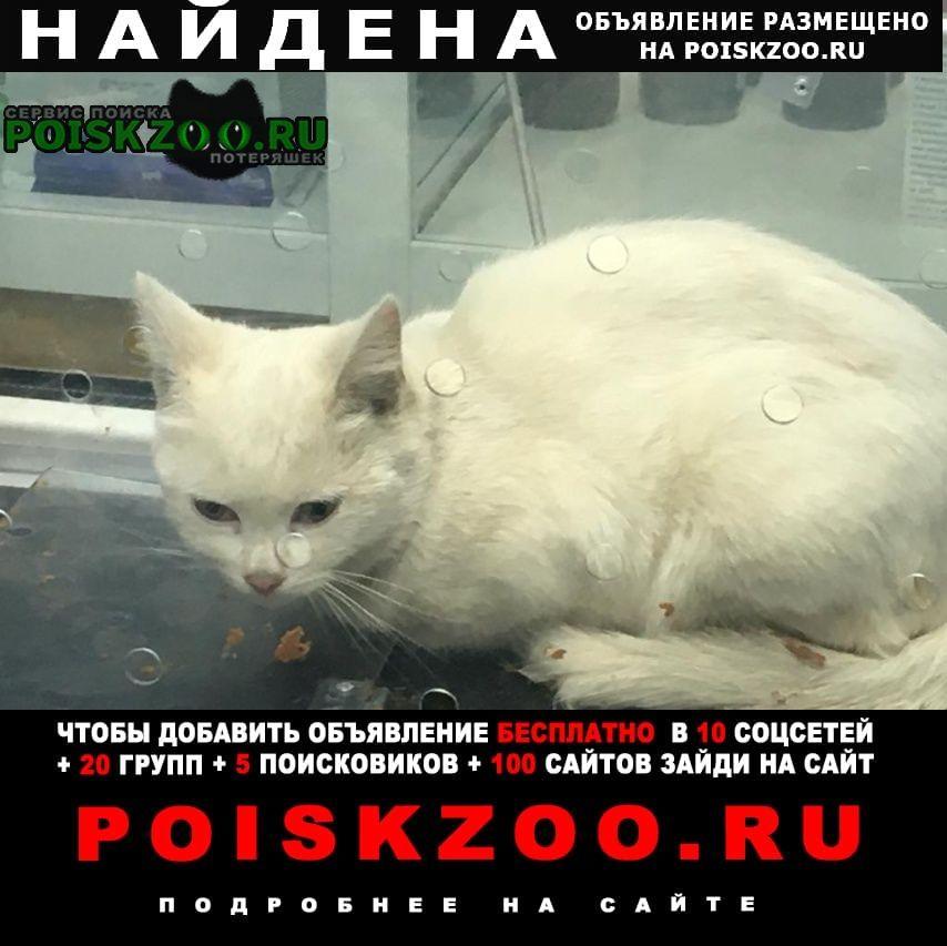 Найдена кошка белая Жуковский