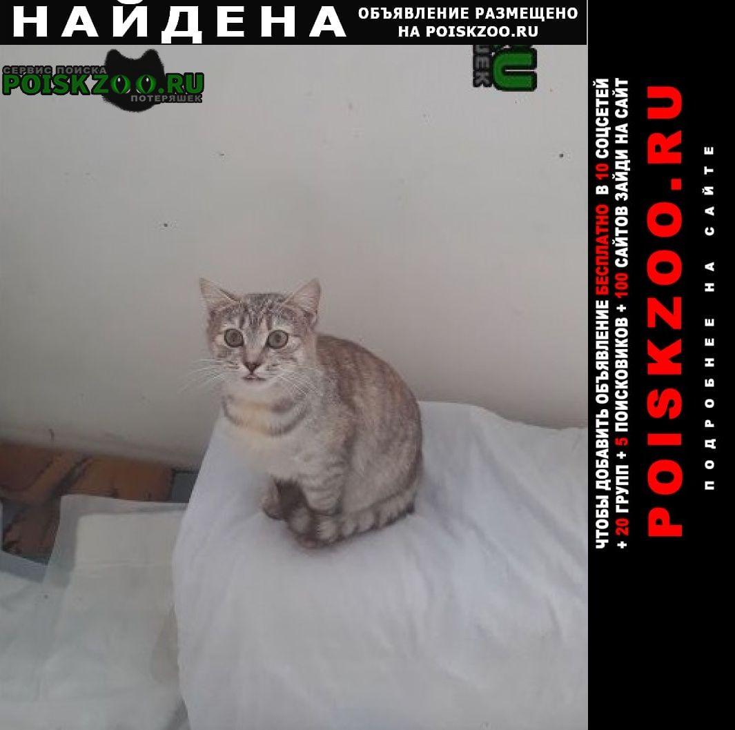 Найдена кошка кошечка возраст от 4 мес Софрино