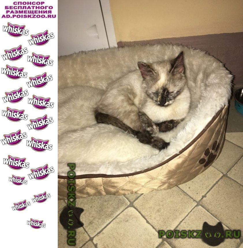 Найдена кошка на набережной тараса шевченко, район дор г.Москва