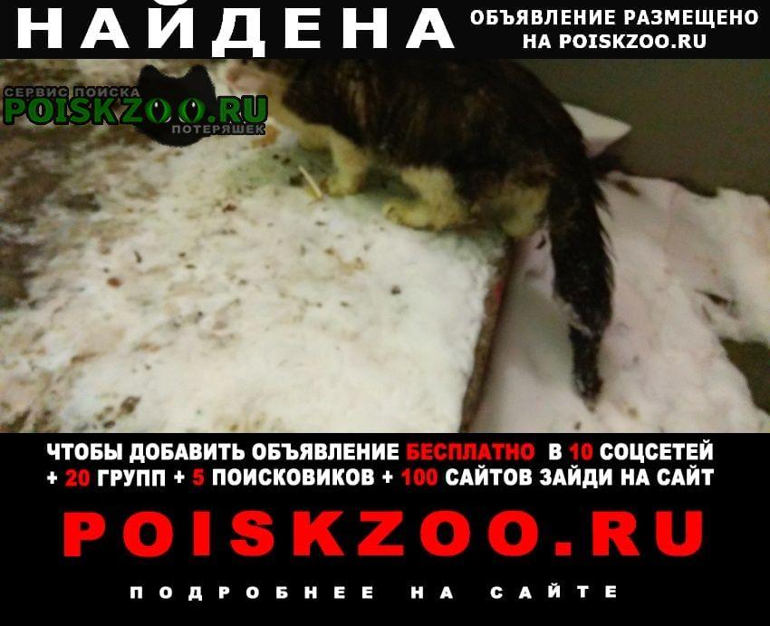 Найдена кошка, рязанский проспект, д. 73 Москва
