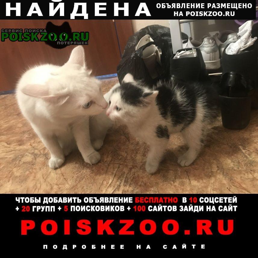 Найдена кошка Кызыл