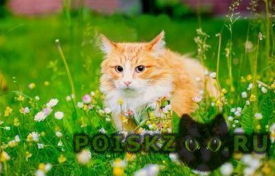 Найден кот г.Череповец