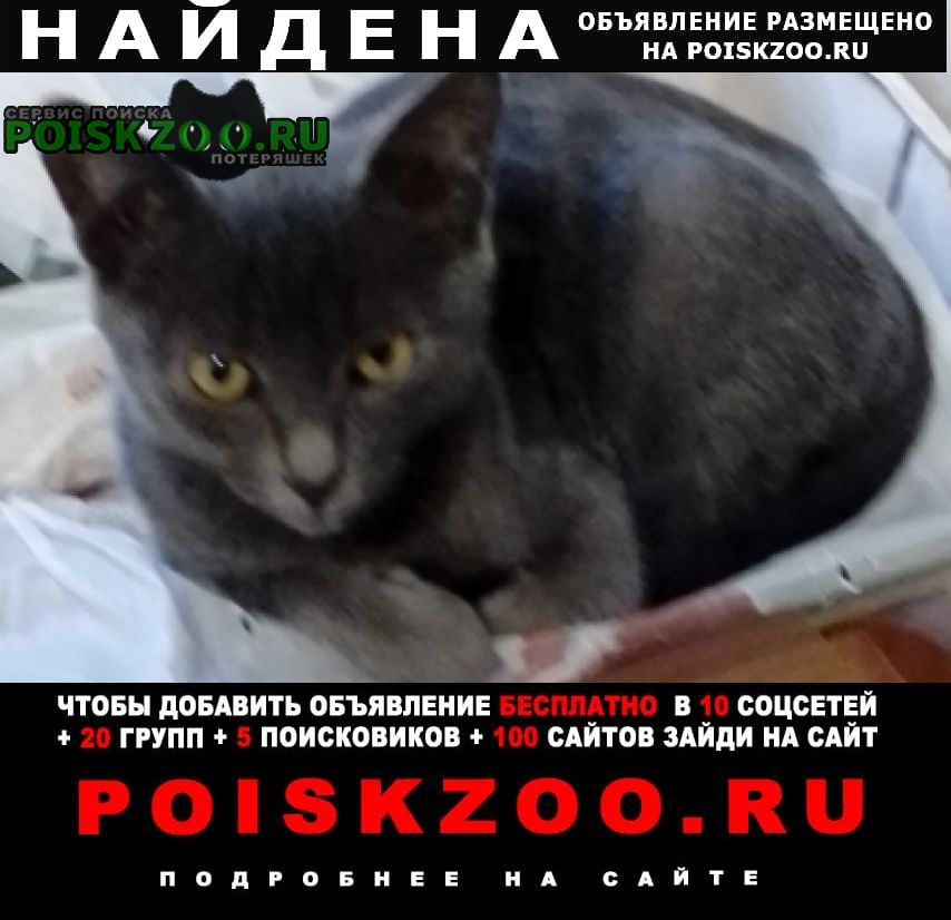 Найден котёнок мальчик дымчато-серый Калуга
