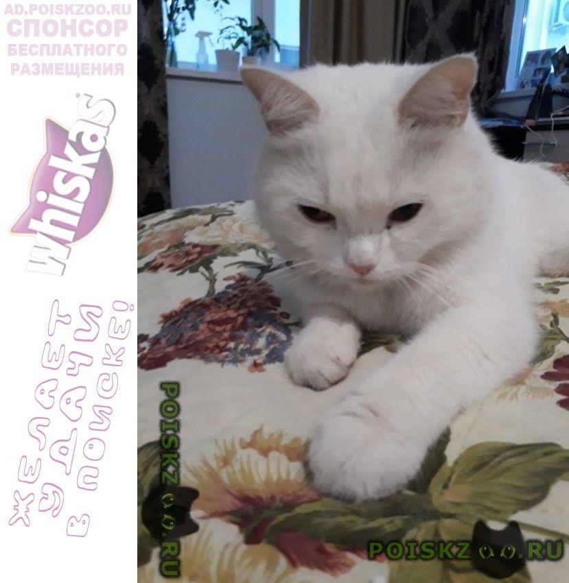 Найдена кошка белая с ошейником г.Сочи