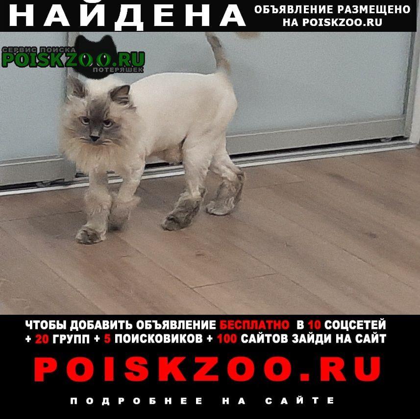 Найден кот Краснодар