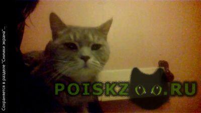 Найден кот г.Королев