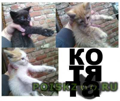 Найдена кошка три меленьких котёнка г.Маркс