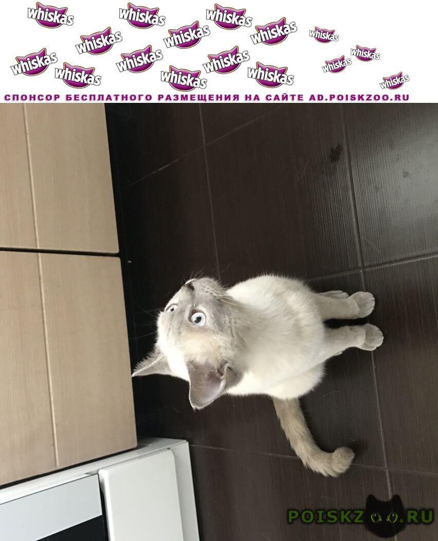 Найден кот г.Ялта