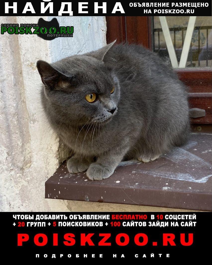 Найдена кошка серая, британская.метро василеостровская Санкт-Петербург