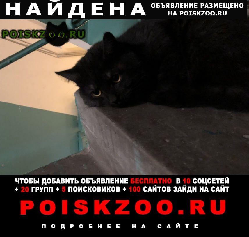 Найдена кошка г.Нижневартовск