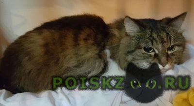 Найдена кошка кот г.Волжский (Волгоградская обл.)