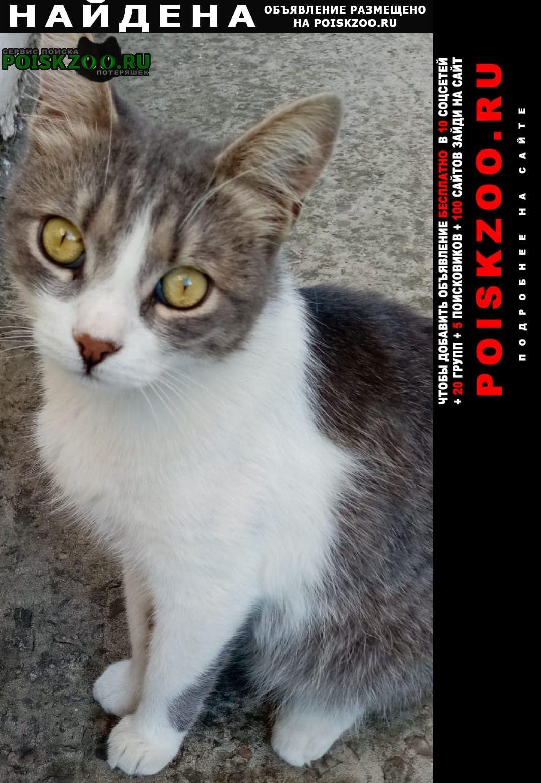Найдена кошка кот Анапа