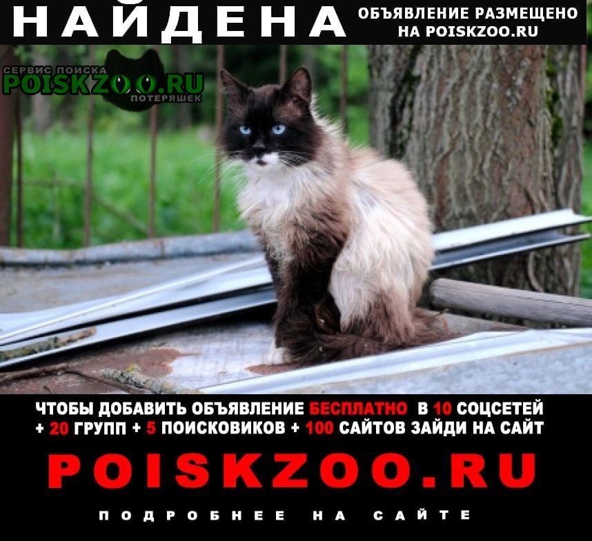 Найден кот Климовск