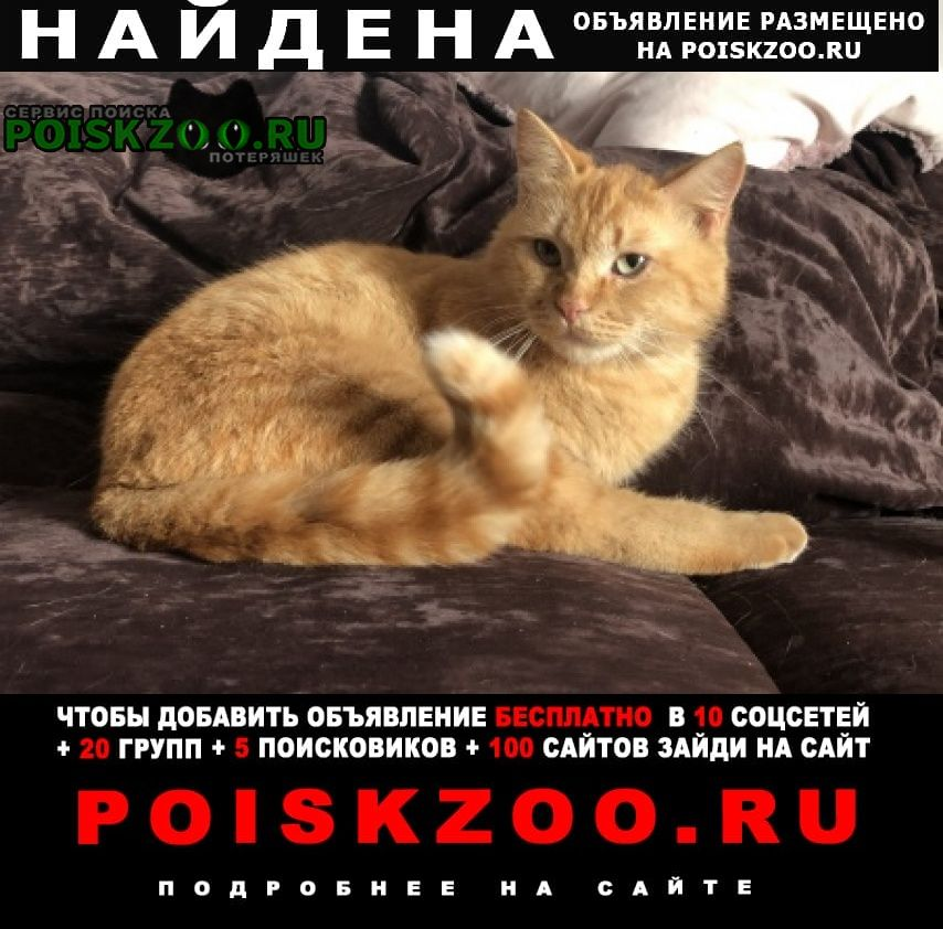Найден кот рыжий Москва