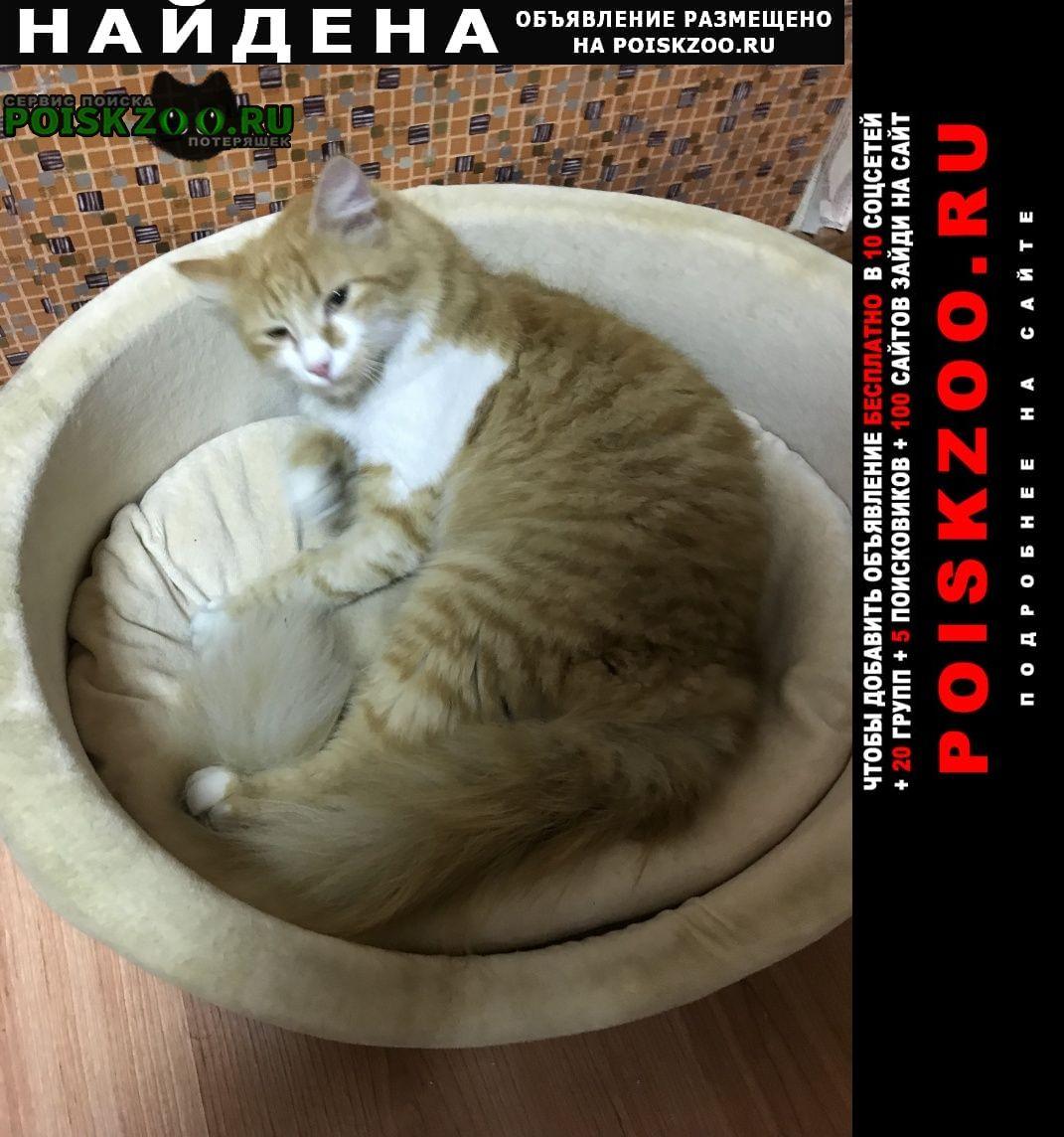 Найдена кошка домашняя рыжая кошечка Химки