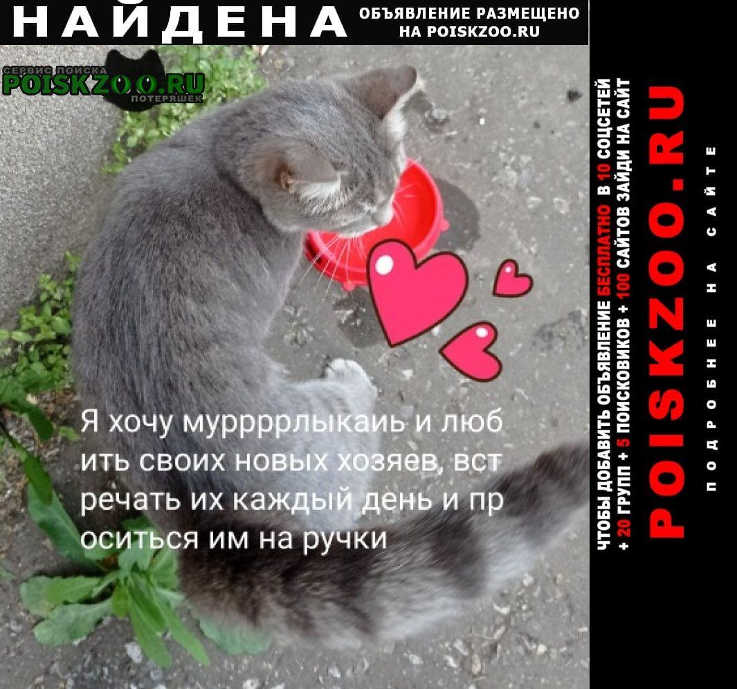Найдена кошка серая 1-1 5 мес Альметьевск