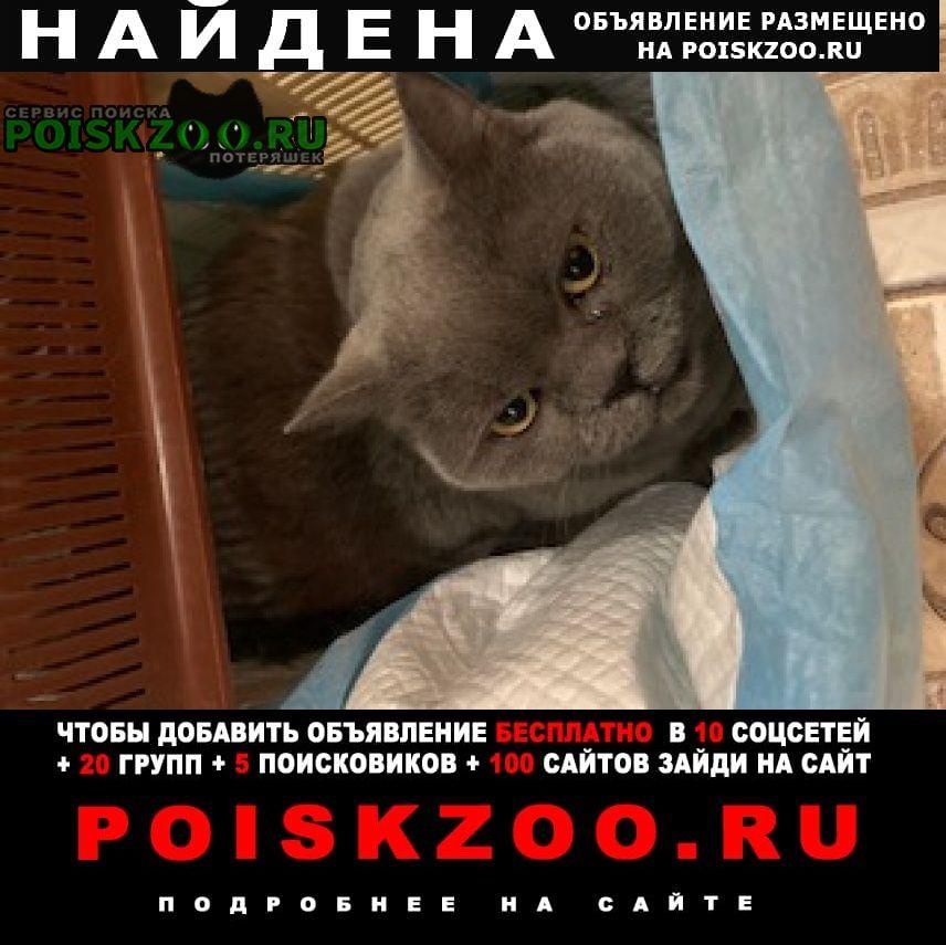 Найдена кошка на ул. горького, 220 Ростов-на-Дону