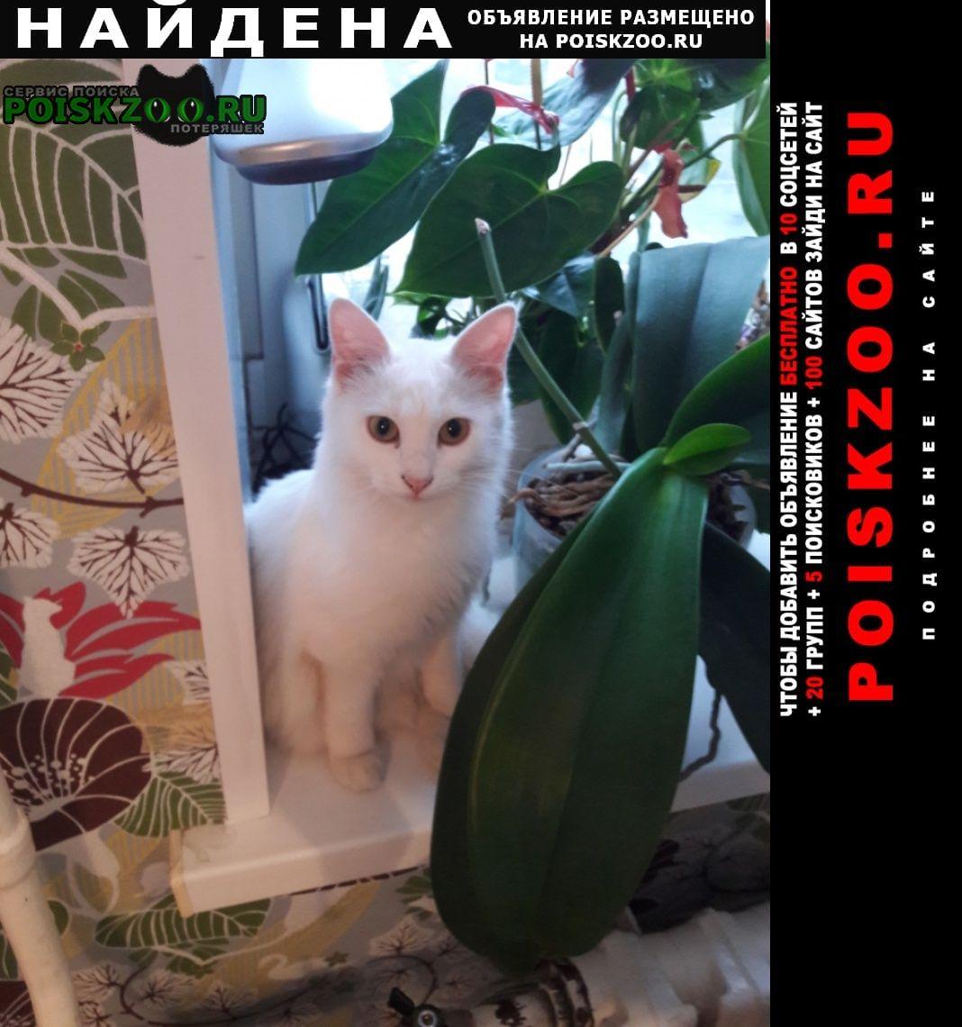 Найдена кошка ул. чугунова.. Раменское