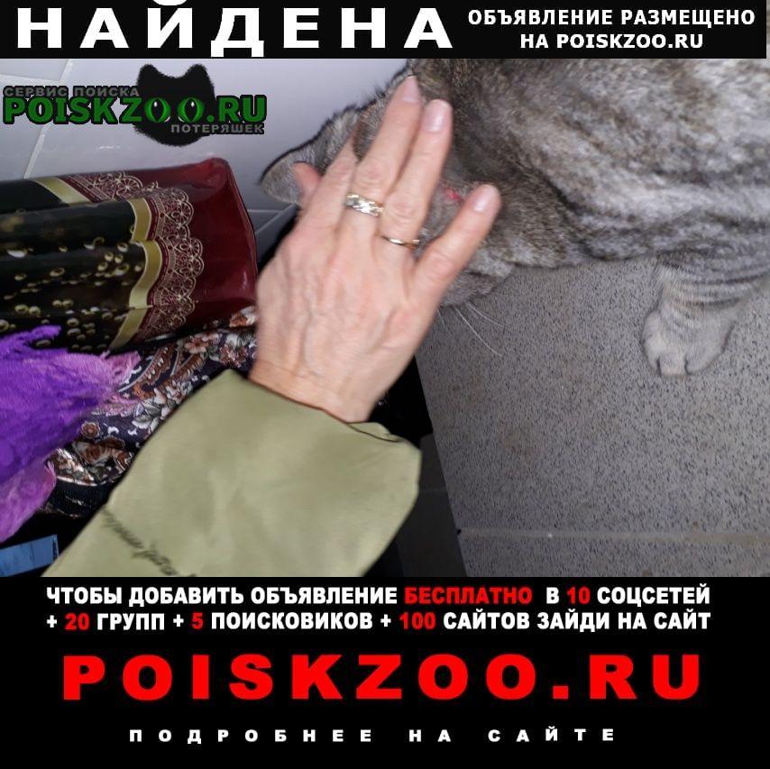 Найдена кошка м. первомайская Москва