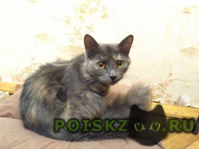 Найдена кошка десятого сентября г.Балашиха