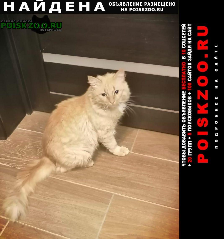 Найдена кошка в селе ерик рыжий кот Белгород
