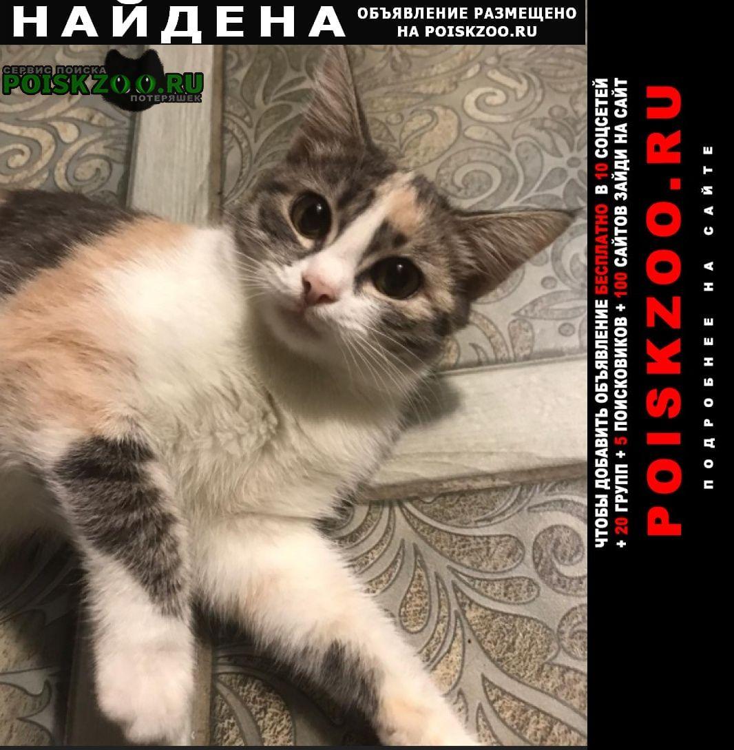Найдена кошка приблудилась беременная кошечка Краснодар