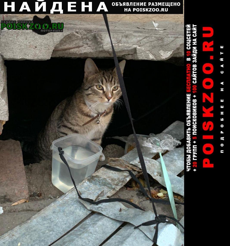 Найдена кошка васильевский остров кадетская Санкт-Петербург