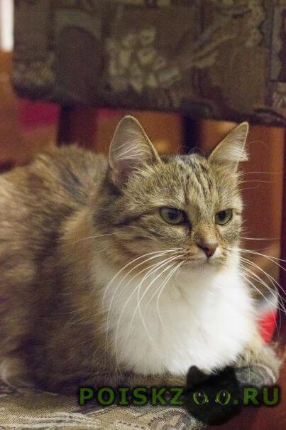 Найдена кошка около - лет г.Тверь