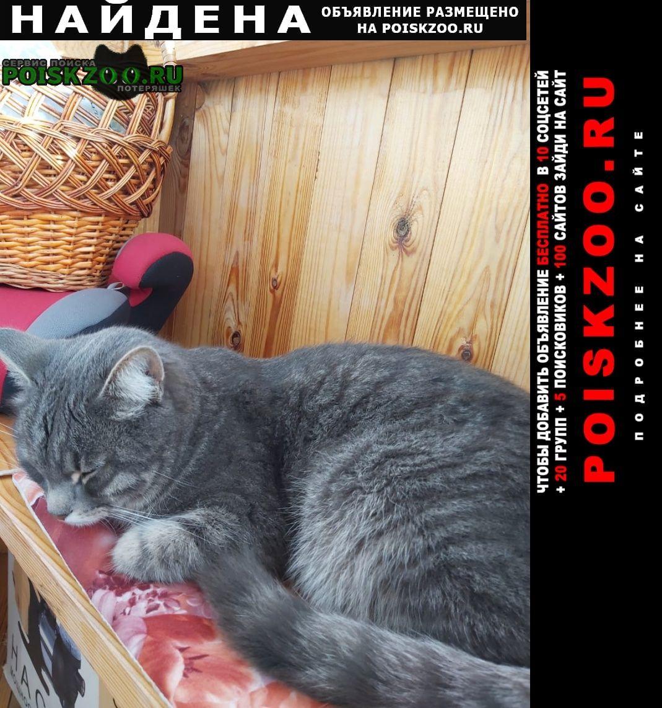 Найдена кошка ступинский район вблизи деревни проскурн Михнево