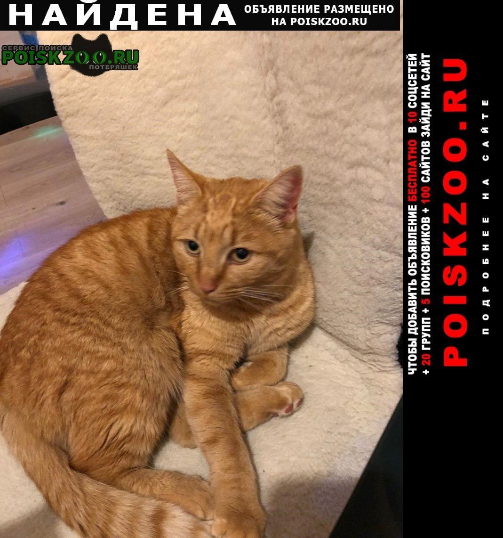 Найдена кошка рыжий кот Михнево