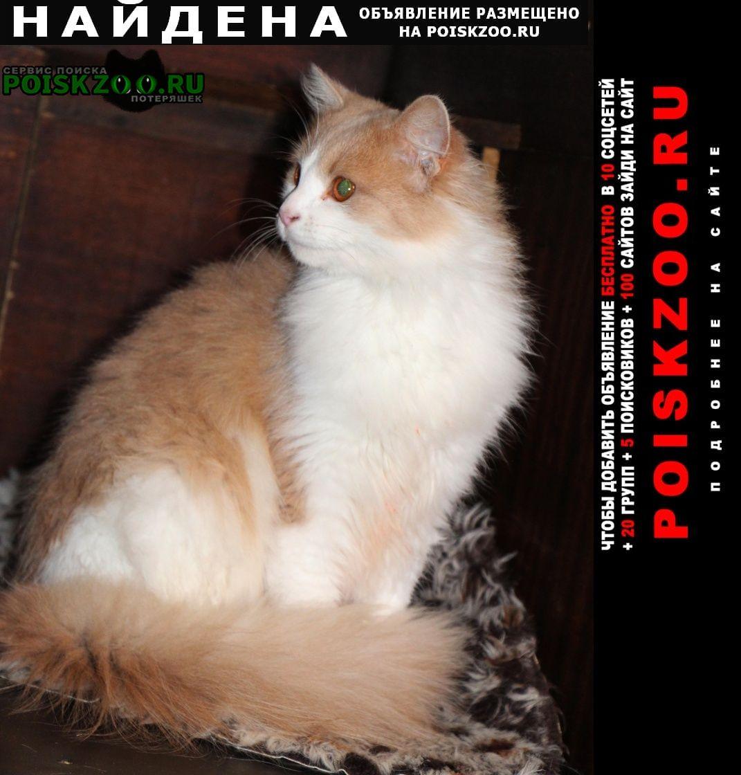 Найдена кошка Домодедово