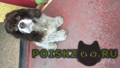 Найдена собака умная ждет хозяина г.Шимановск