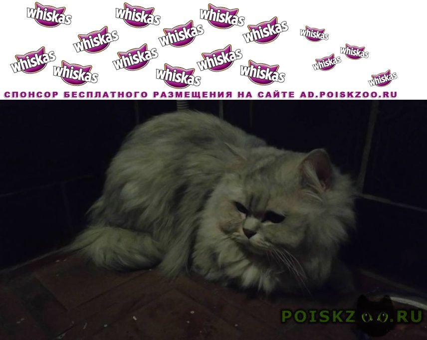 Найдена кошка чья потеряшка? г.Москва