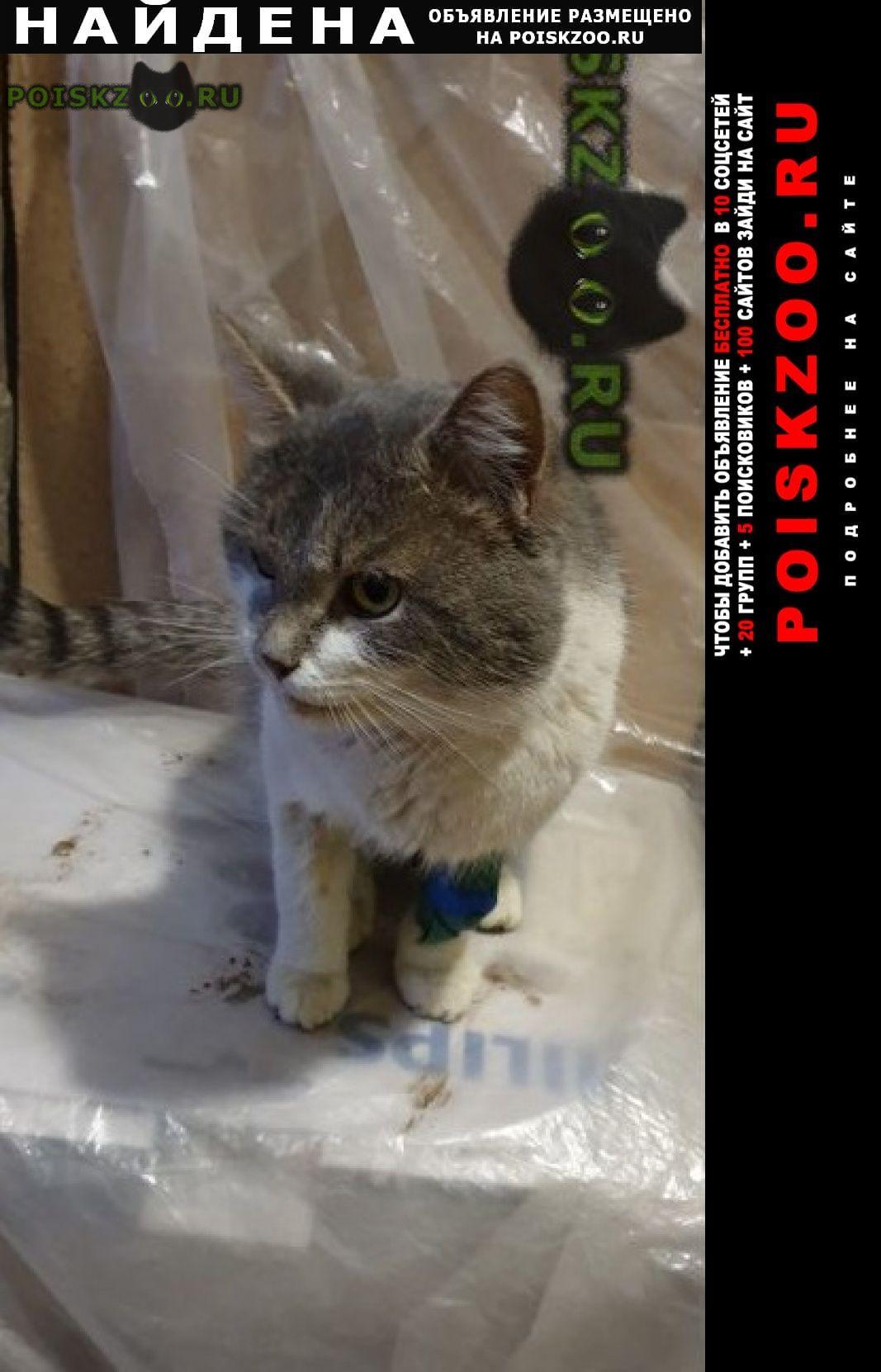 Найден кот г.Саратов
