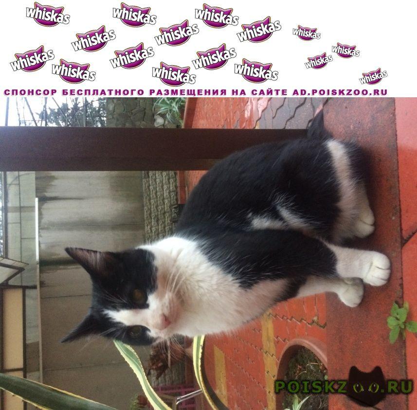 Найдена кошка кот в парке на вишневой г.Сочи