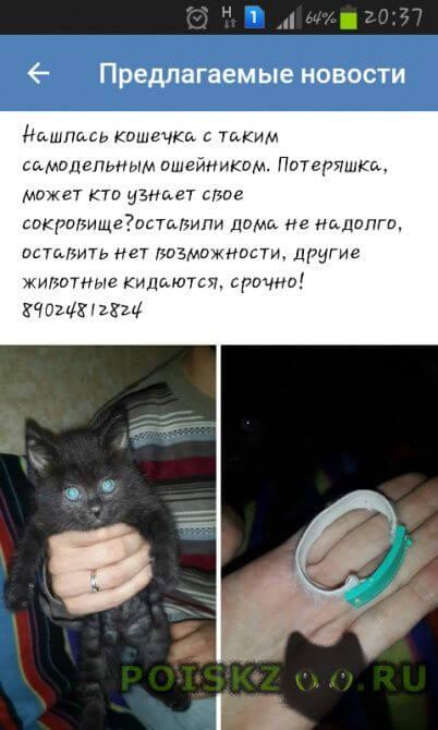 Найдена кошка г.Владивосток